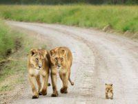 37 fenomenalnih fotografija roditeljstva u 'divljini'. Je li vam srce spremno?