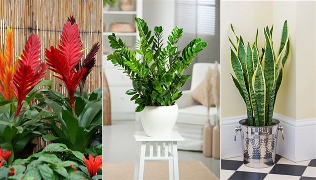 Najvažniji savjeti  za sobne  biljke