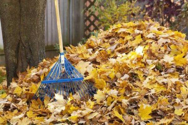 Kako pripremiti  vrt za zimu u 6 jednostavnih koraka