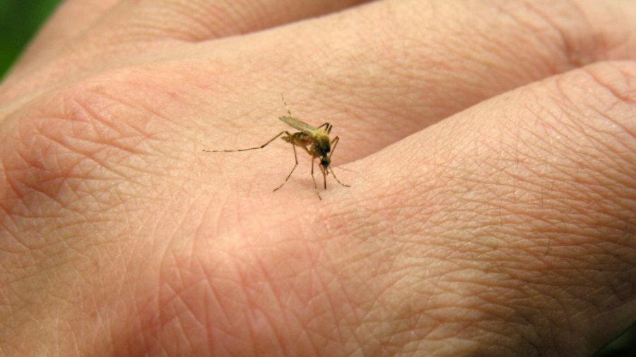 Kako zaštititi vaš dom od komaraca