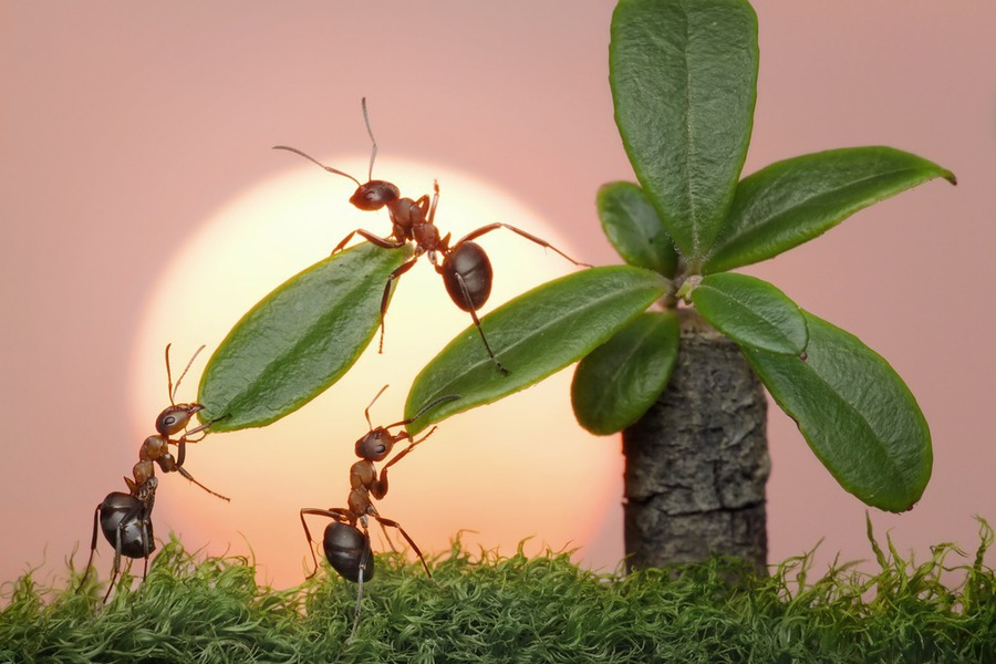 9 prirodnih recepata za borbu protiv mrava na voću i bilju