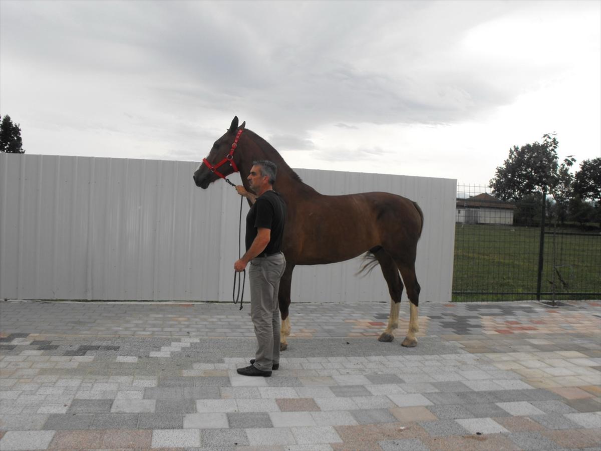 Irfan Cepić iz Prijedora zaljubljenik u konje: Želja oformiti konjički klub