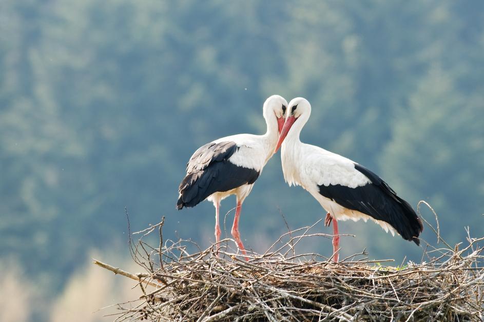 Ostavite vodu na dostupnom mjestu i pomozite pticama da prežive ljeto