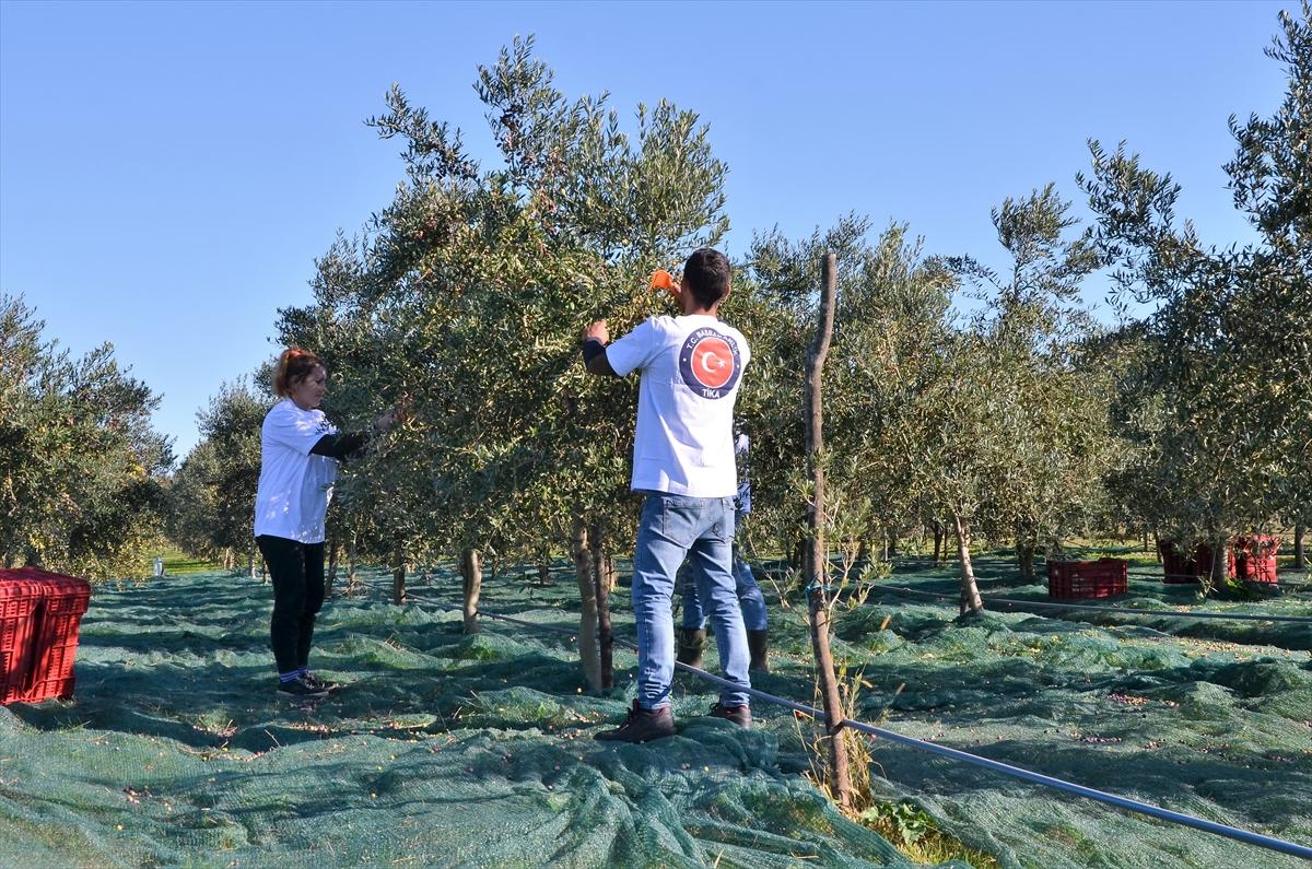 Uz podršku TIKA-e: Proizvođači maslinovog ulja iz Ulcinja žele na međunarodno tržište