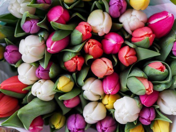 Dekor ideje: Tulipani u interijeru