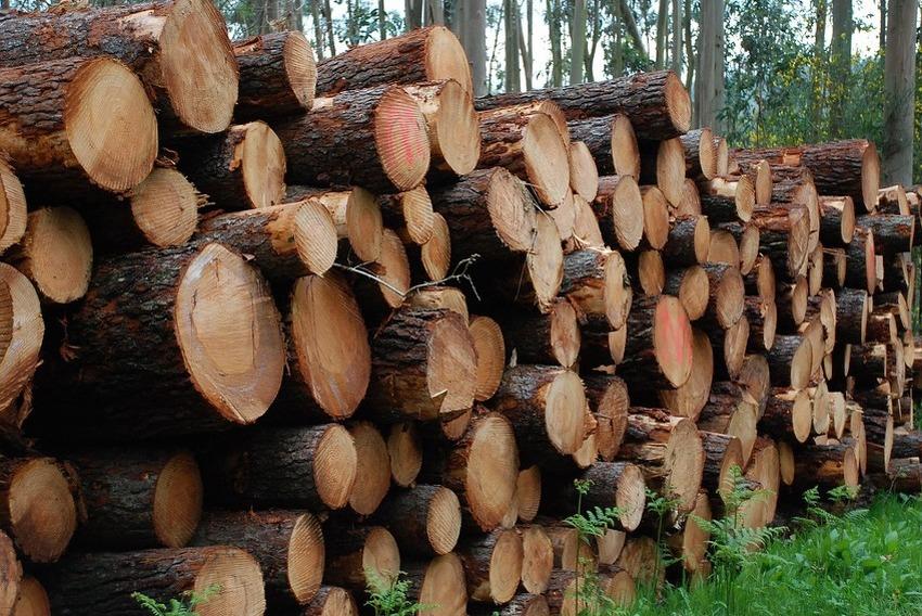 balvani-drvo