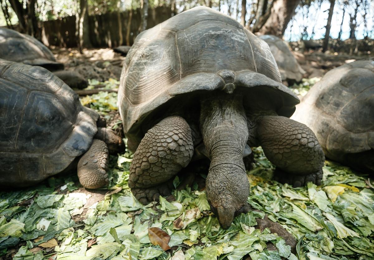 Zanzibar: Otok Changuu dom džinovskih kornjača