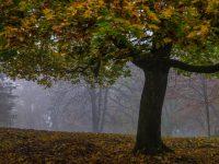 Jesen u BiH: niske temperature i padavine na pomolu