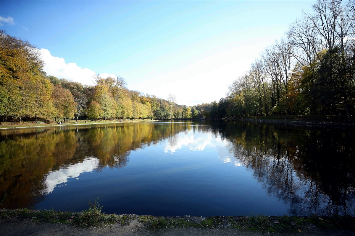 Jesen u Briselu: Parkovi u zlatnožutoj boji