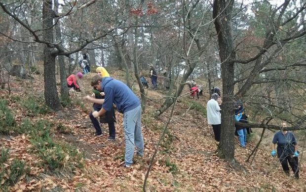Volonteri iz Živinica zasadili 200 sadnica u akciji pošumljavanja