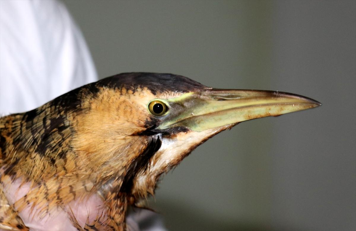 Ptici polomljenog krila prvi put ugrađen fiksator od platine