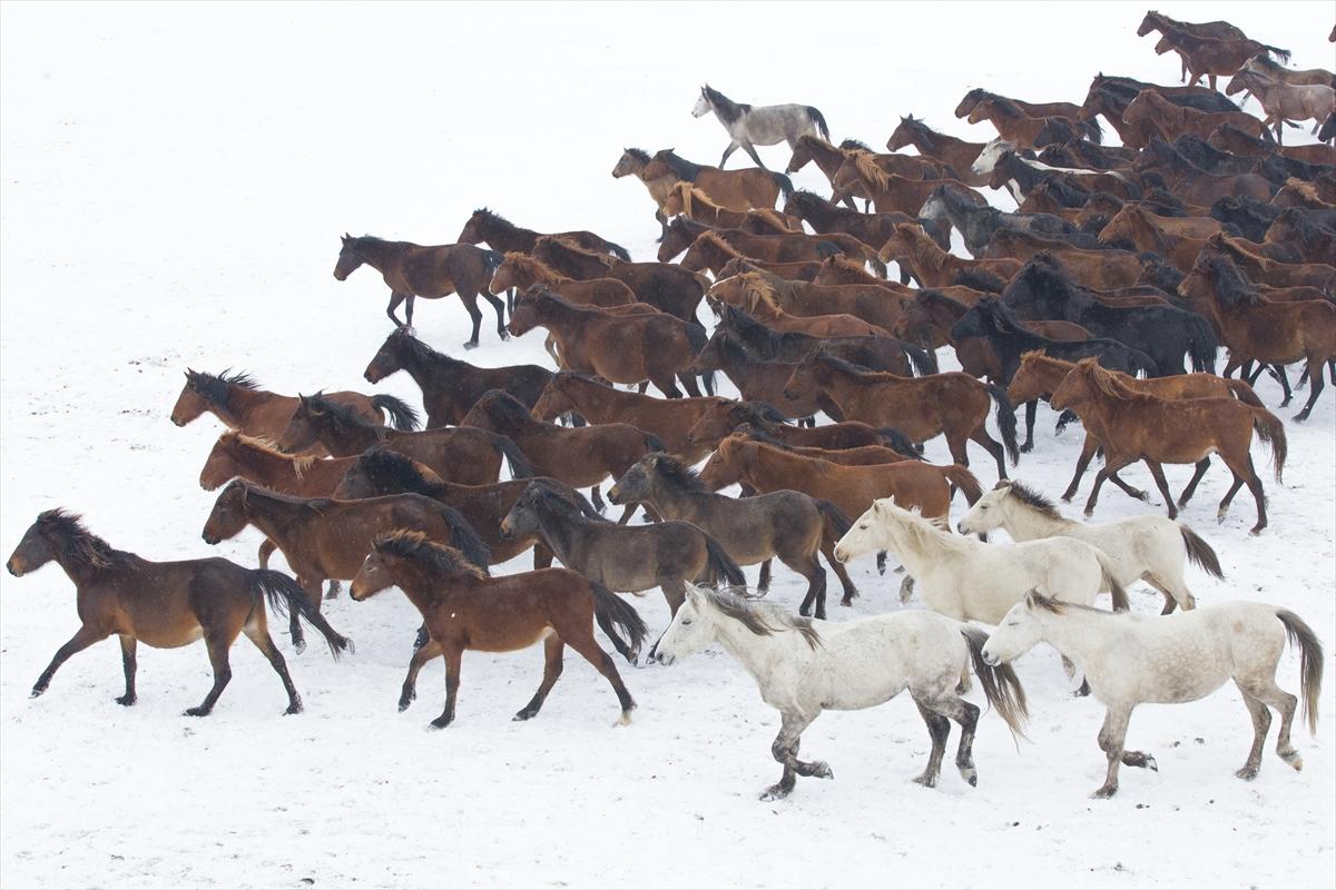 Divlji konji simbol slobode i ukras planine Erciyes
