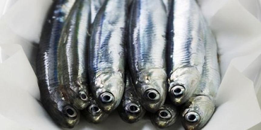 Iz fabrike u Živinicama kreće izvoz ribe u Evropu